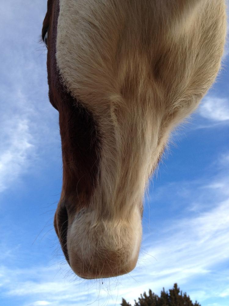 The good boy horse (3/6)