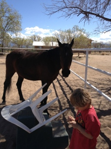 Kaiden is one of the youngest horse trainers I know - creating curiosity