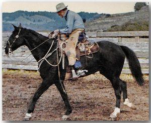Bill Dorrance, Branding at Fish Ranch. photo: Tootie Truesdell