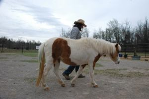 Rose, the feisty pony, comes into relationship.