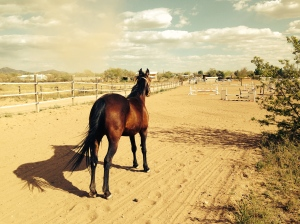Jazzie stays and watches while a dust devil envelops a horse and rider.
