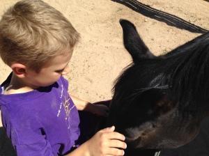 Kaiden doing a foal feeding with Zuzka.