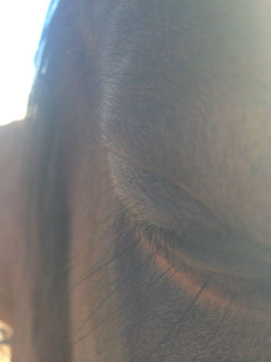 Do Horses Have Precognition? (1/6)