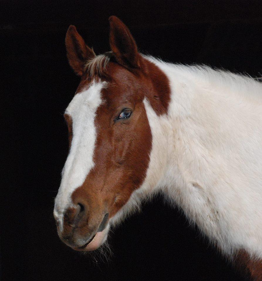 The good boy horse (1/6)