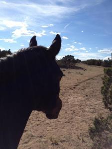 Zuzka in the pasture