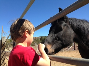 Kaiden knows how to greet horses in a way they understand.