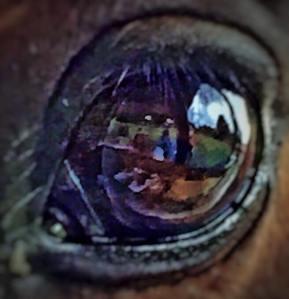 nobles_eye