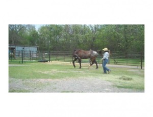 Dancing with Talk of Texas (Tex), Regional Appaloosa Grand Champion Race Horse 2006