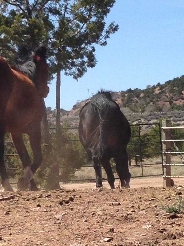 How horses
