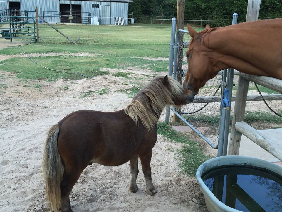 Support groups for people and their horses (5/6)